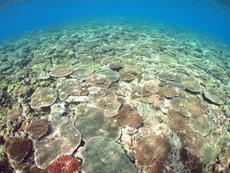 修学旅行の代替プログラム・沖縄のサンゴ礁
