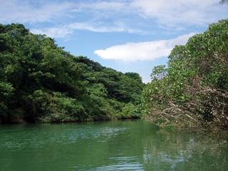 水量が豊富な比謝川(沖縄本島中部)